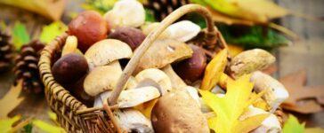 Tipps für Pilzsammler
